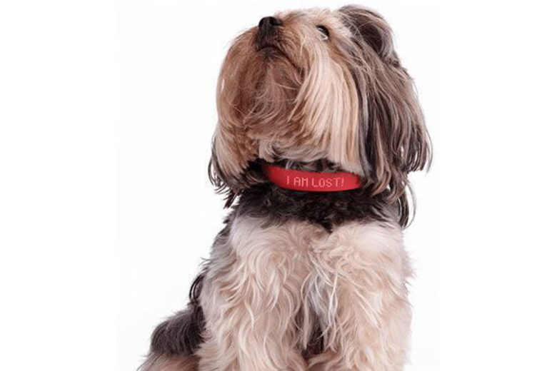 Kyon Collar: Pet Tech