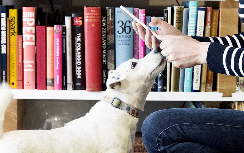 Gadgets and Apps for Dogs