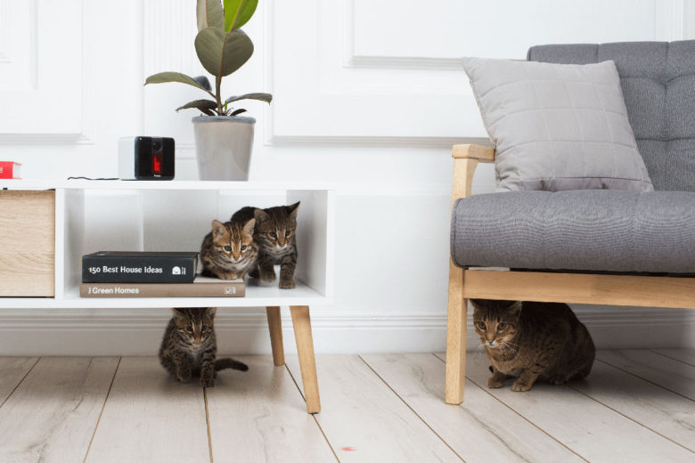 Pet Cube: Pet Tech