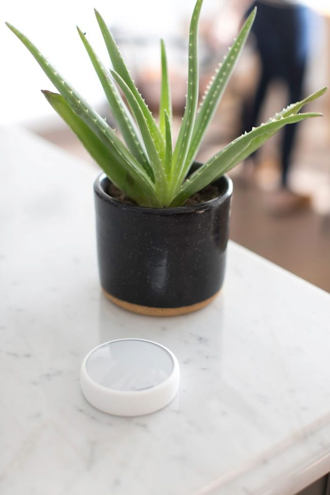 indoor air: Plants