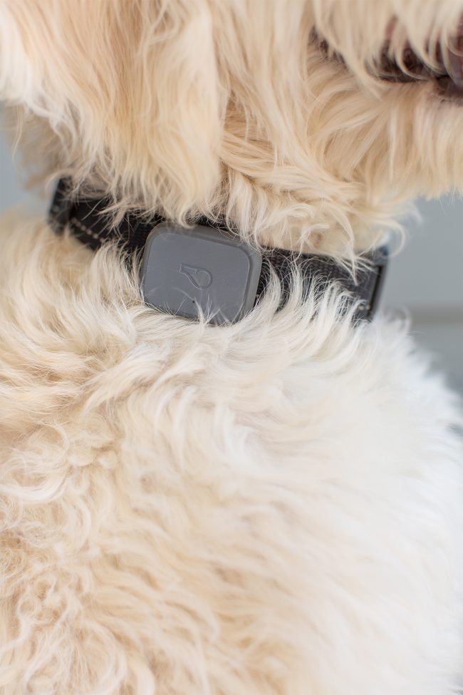 Whistle GPS Location and Activity Tracker for Dogs