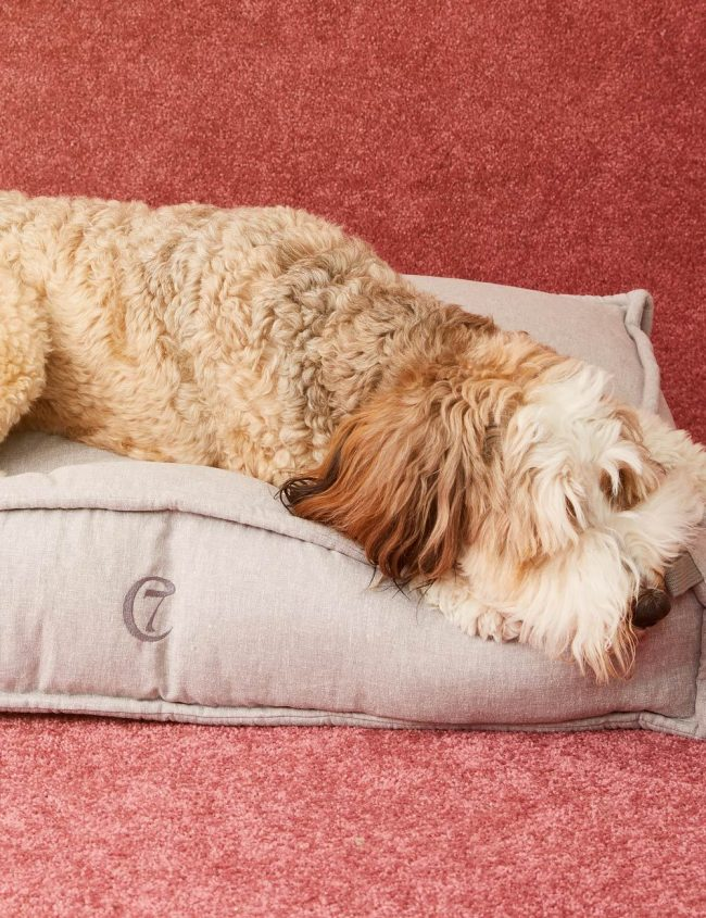 Cloud 7 Dog Bed: Shopping with Marty